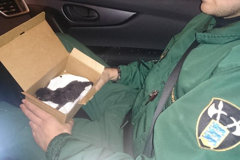 Mupo päästis prügikonteinerist vastsündinud kassipoja ja otsis talle omaniku