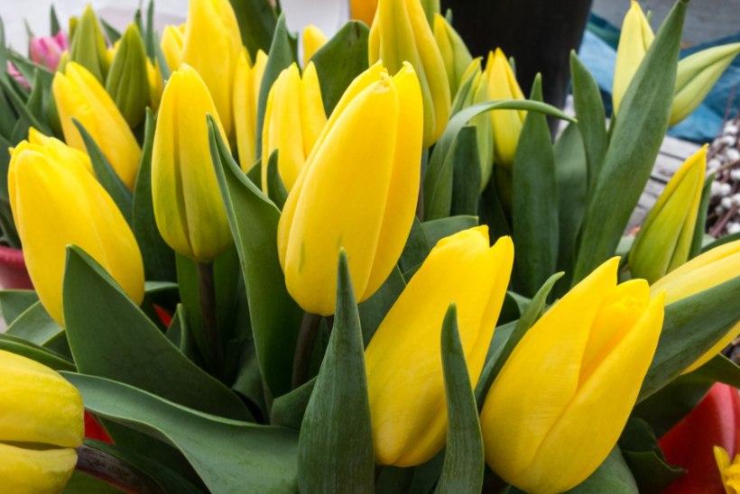 Kas lilled on ostetud? Poeketid plaanivad täna müüa rekordiliselt palju roose ja tulpe