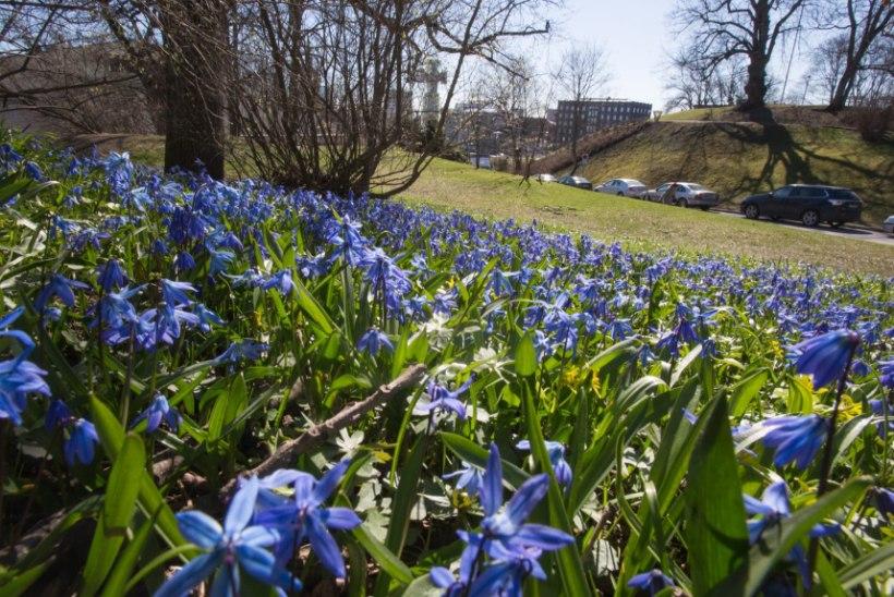 VAHVA UUDIS: aprill tuleb tavapärasest soojem