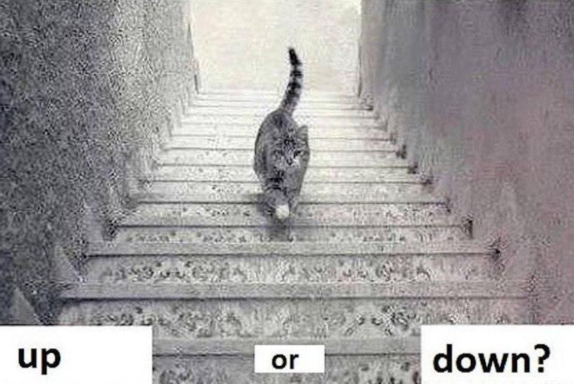 UUS INTERNETIHULLUS: kas kiisu ronib trepist üles või hoopis alla?