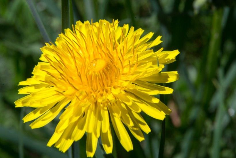 Millised taimed aitavad kevadväsimuse vastu?
