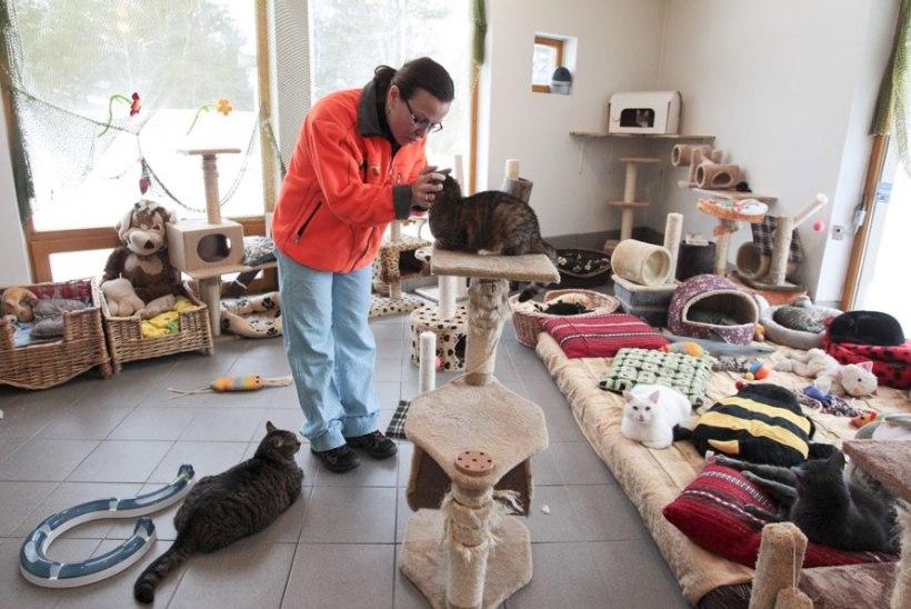 Tallinn koostab uut kodutute loomade varjupaiga hanget