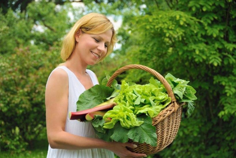 Kuus põhjust, miks kevadel oma tervise nimel rabarberit süüa