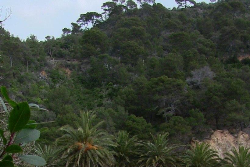 ÕHTULEHT HISPAANIAS | PÄIKSELINE GALERII: rannajalgpallurid alustasid koduseks tippturniiriks valmistumist palmide all