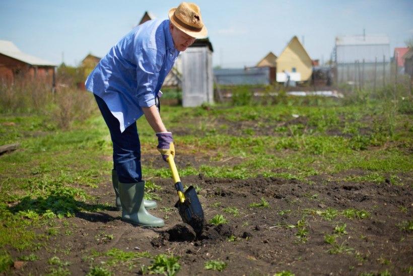 Kuidas kevadeti aias liigesesäästlikult askeldada?