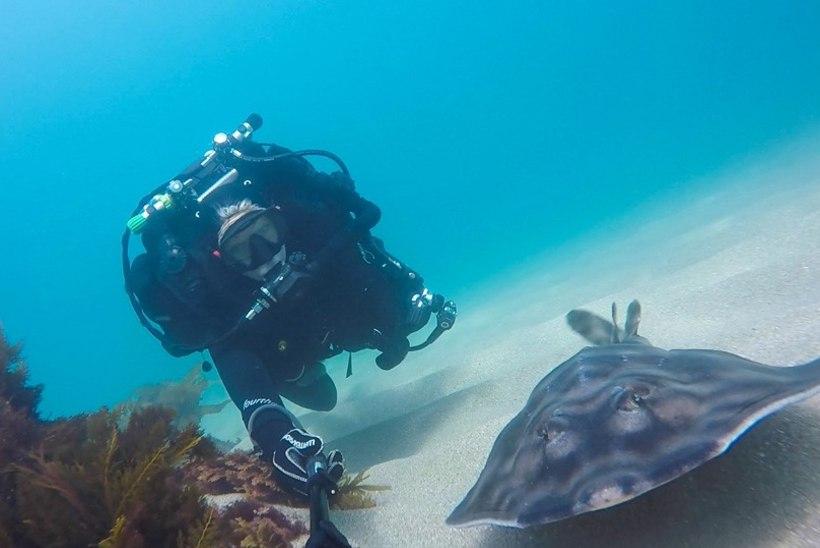 GALERII: naised teevad selfie'sid haide, raide ja elektriangerjatega