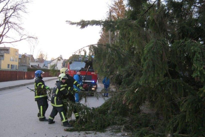 Päästjatel oli eile palju tööd teele ja elektriliinidele kukkunud puudega