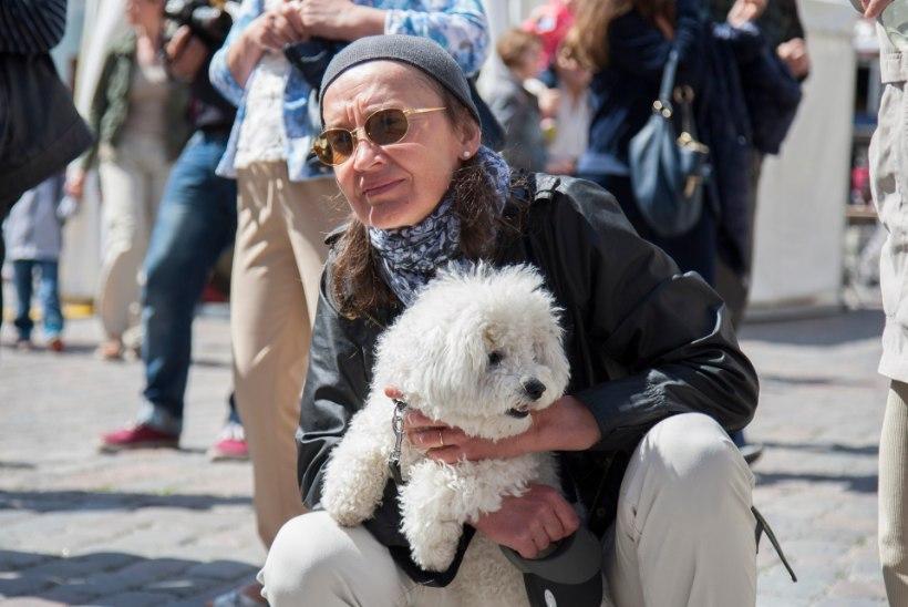 NUNNU GALERII | Koerad demonstreerisid Tallinna Raekoja platsil oma oskusi!
