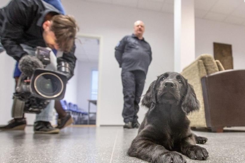 Politsei õpetab koera kurjategijate raha otsima