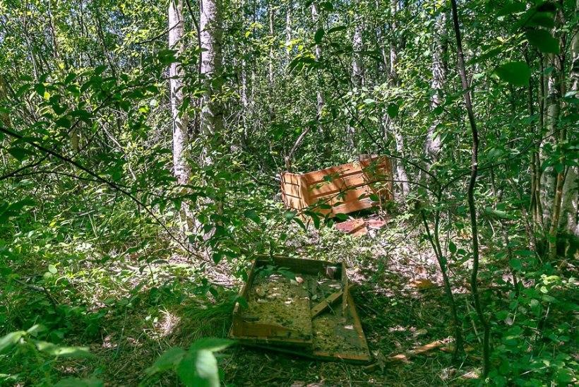 FOTOD | Maia karu hävitustöö - mesitarust jäid maha vaid pilpad