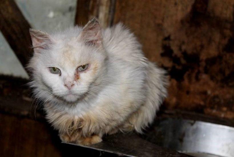 ÕUDUS VIIMSIS: vanema naisterahva juurest leiti 50 abi vajavat kassi