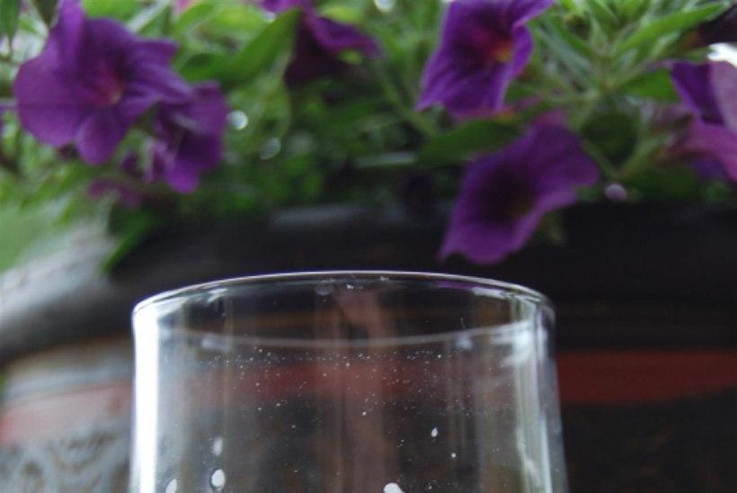 Rabarberilimonaad rosmariiniga