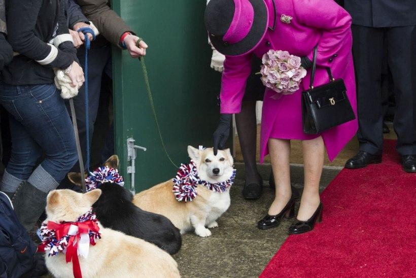 Kuninganna Elizabeth II tõmbab koerakasvatust koomale