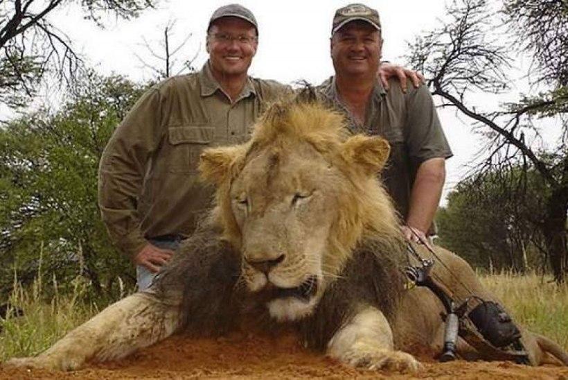 40 TUNDI SURMAPIINU: USA hambaarst tappis Zimbabwe lemmiklõvi