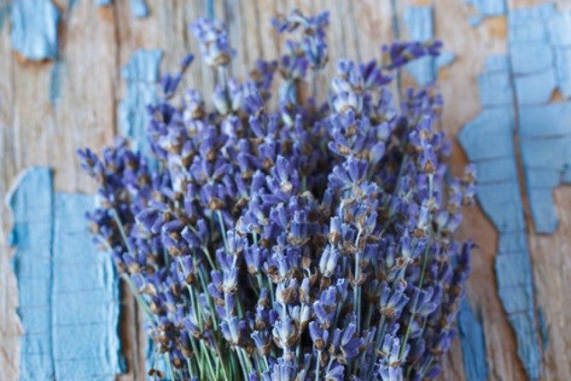 Kas teadsid? 5 lavendli tervendavat hüve