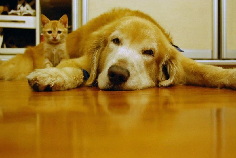 Loomakaitse selts paneb südamele: ära hülga sügise saabudes oma lemmiklooma!