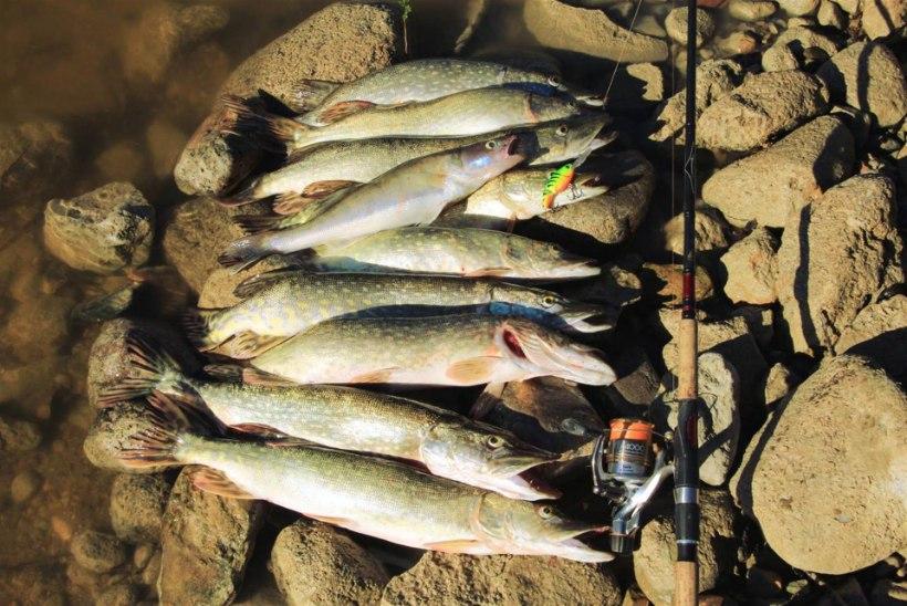 Kalapäev Suur-Emajõel, august 2015