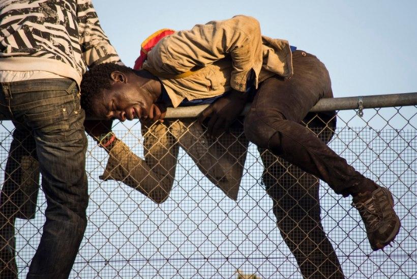 Aafriklane suri kohvris teel Euroopasse