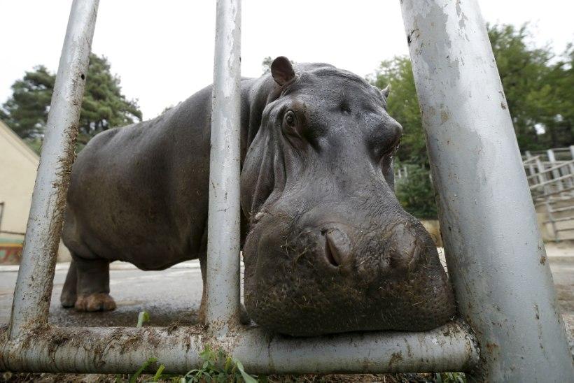FOTOD   Üleujutusest laastatud Thbilisi loomaaed avas taas uksed