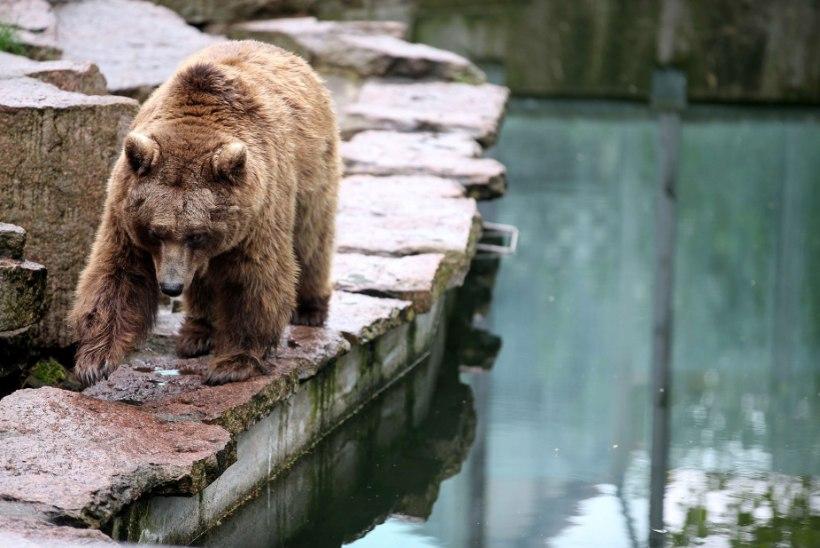 LOODUS TRIKITAB: karu päästis uppuva varese