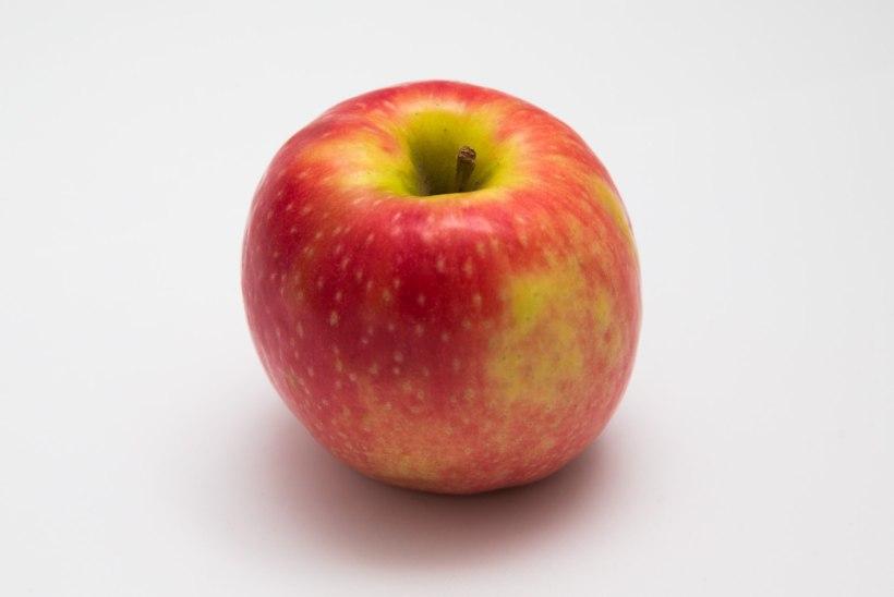 Õunapuid võib lõigata ka sügisel