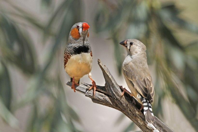 Armastus on lindudelegi oluline