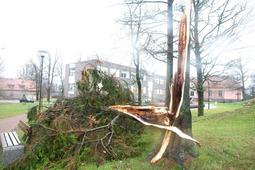 TV3 VIDEO | Saaremaal viis tuulispask kortermajalt katuse ja murdis puid