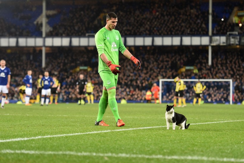 FOTOD JA VIDEO   Evertoni väravavaht hirmutas nunnu kiisu palliplatsilt minema
