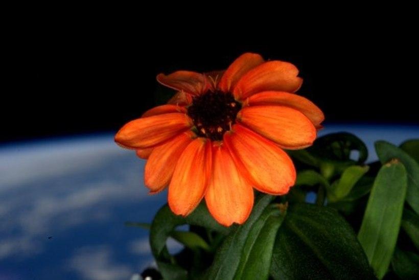 PILTUUDIS | VAATA IMET! Kosmoses puhkes lill õide