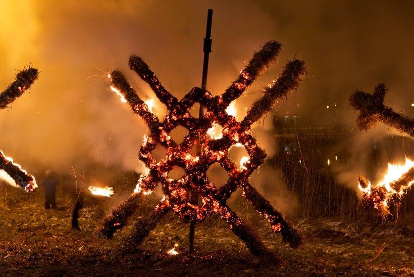 Jõulupuudest hakatakse tuleskulptuure meisterdama