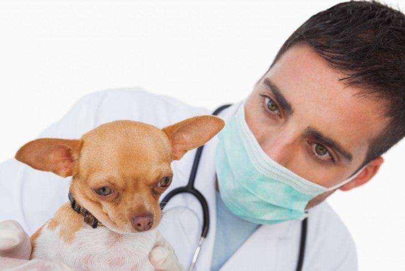 Märgid, et sinu lemmikloom võib haige olla