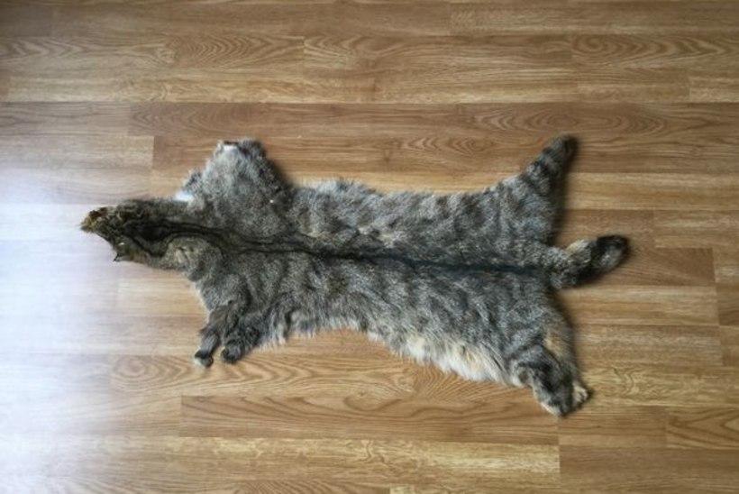 Oksjonil pakutakse müügiks loodusliku kassi nahka