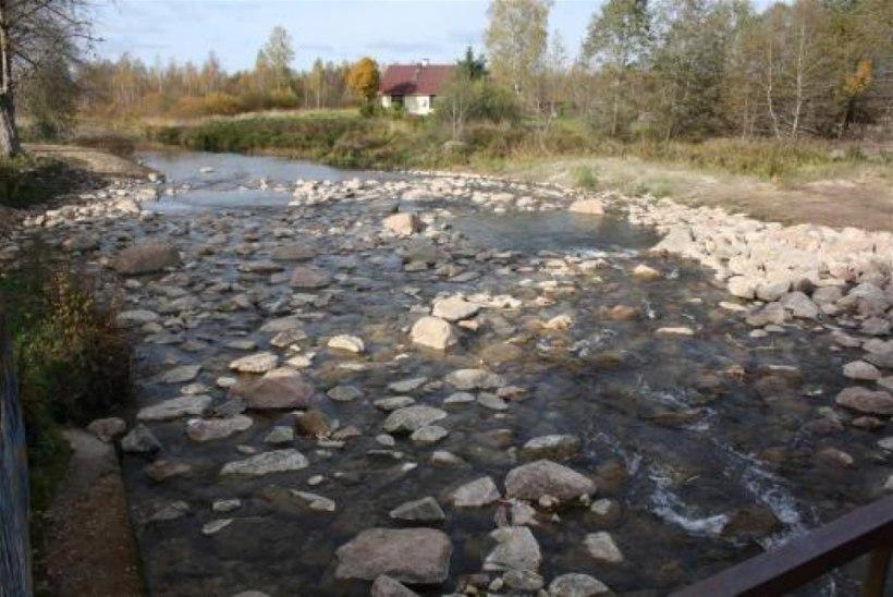 Keskkonnaamet: kalade kuderände õnnestumiseks peavad kalapääsud olema hooldatud