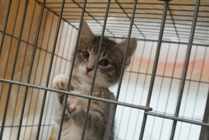 Kohtuasi: loomade pidamisele kulus linnal 5800 eurot