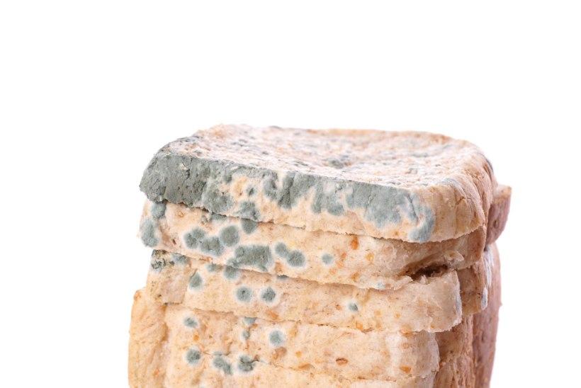 Kas leivatoodetele tekkiv hallitus on tervisele kahjulik?
