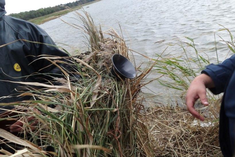 Kuumaverelised Itaalia linnujahimehed rikuvad Eestis seadust