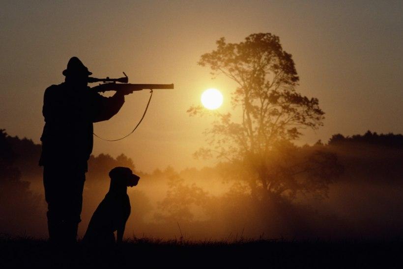 Ajujahil tabas koera surmav kuul