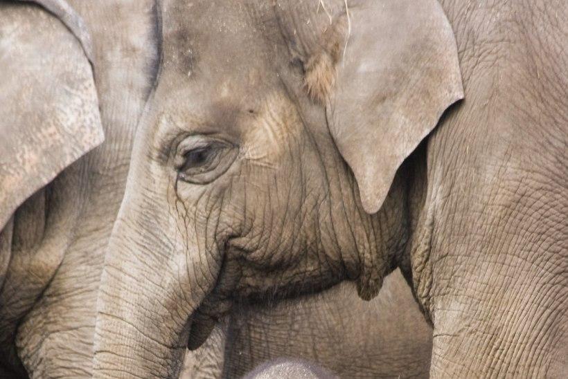 Täna on rahvusvaheline loomade ja loomakaitsepäev – mida saad loomade heaks teha?