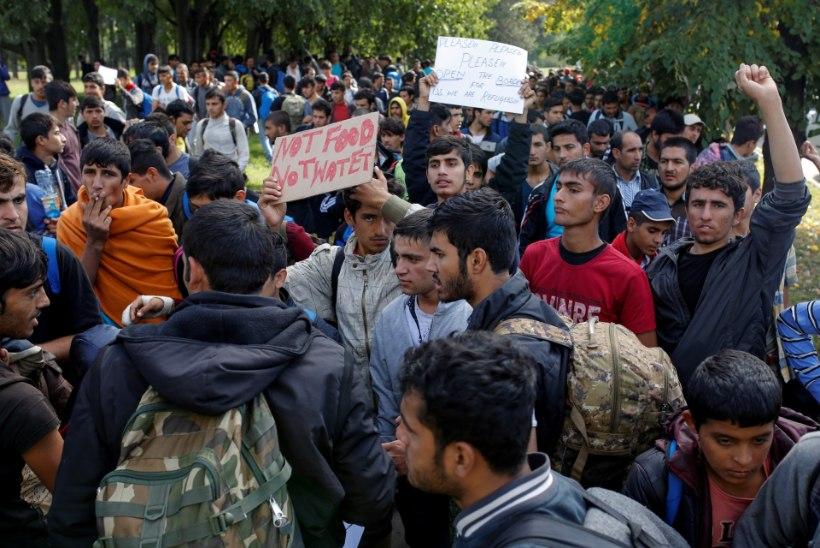 FOTOD | Sajad varjupaigataotlejad rändavad Belgradist Ungari piiri poole