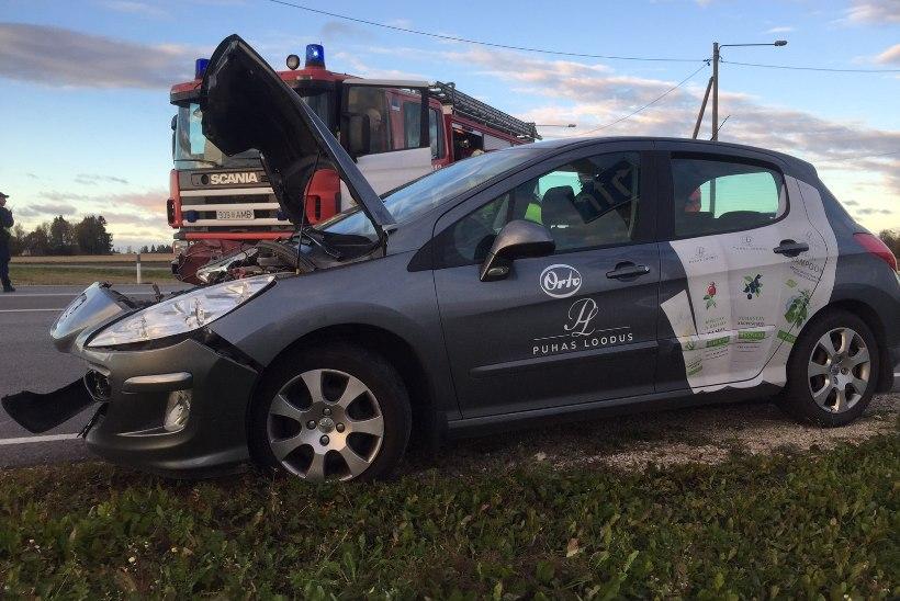 FOTOD | Jõgevamaal põrkasid Peugeot'd kokku