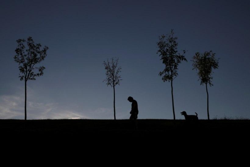 Hispaanias koostab linn koerte DNA andmebaasi ja analüüsib väljaheiteid, et karistada lohakaid omanikke