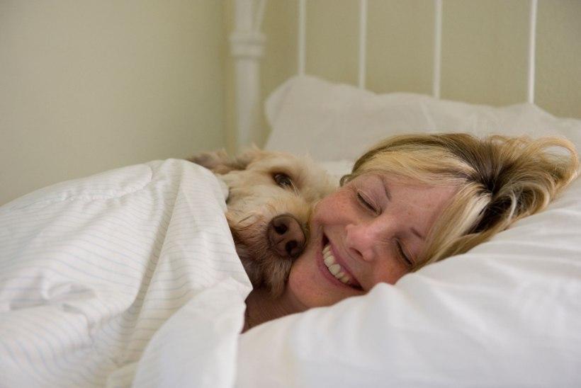 Viis põhjust, miks koeraga voodi jagamine on tegelikult väga kasulik!