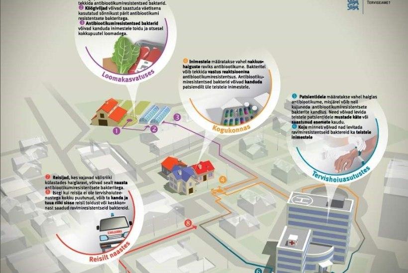 INFOGRAAFIK: Kas sina tead, kuidas levib antibiootikumiresistentsus?