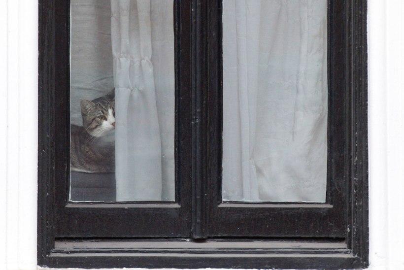 FOTOD | Assange´i kass pani Rootsi prokuröri külaskäigu auks lipsu kaela
