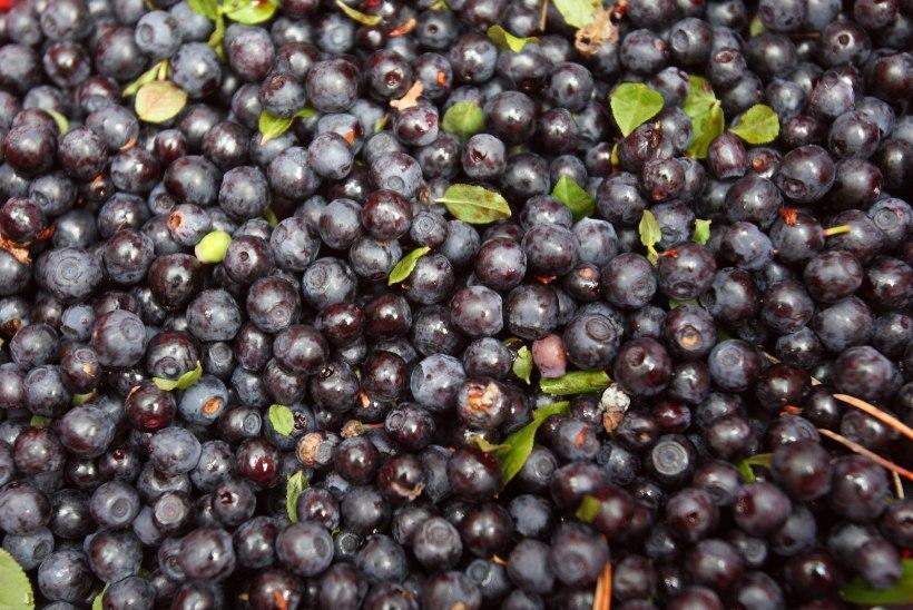 Kuidas talveperioodil toiduga jumet parandada?