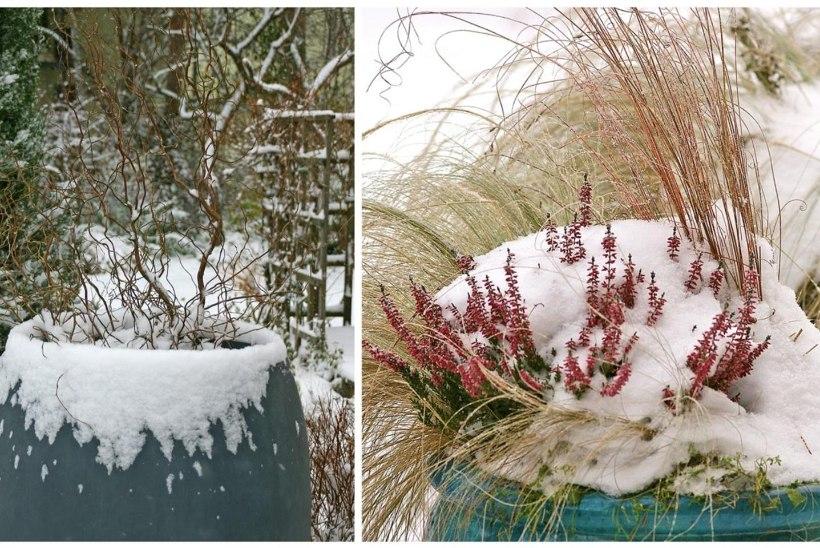 Terrass ja ukseesine kauniks ehk Millised lilled passivad talvel õuepotti?