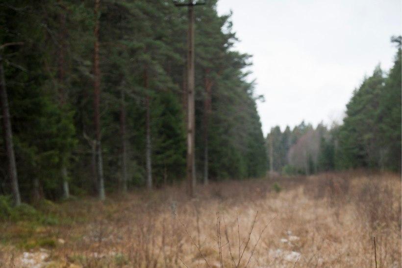 Keskkonnaministeerium: metsaseaduse väljatöötamisel on huvigruppidega tehtud tihedat koostööd