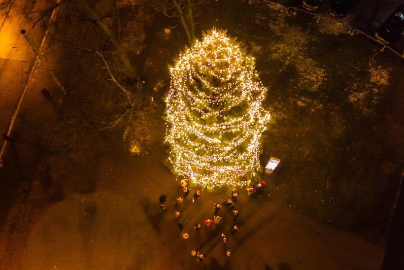 FOTOUUDIS | Tallinna kõrgeim jõulukuusk asub Kompassi väljakul