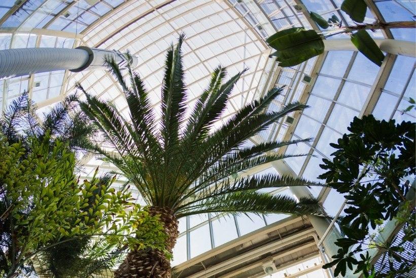 Tallinna botaanikaaed tähistab 55. sünnipäeva