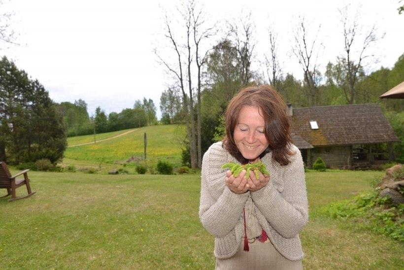 Neli kodumaist taime, millega taimetark Irje Karjus soovitab tõbesid peletada